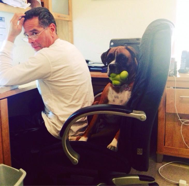 perro sentado en la silla con el hombre