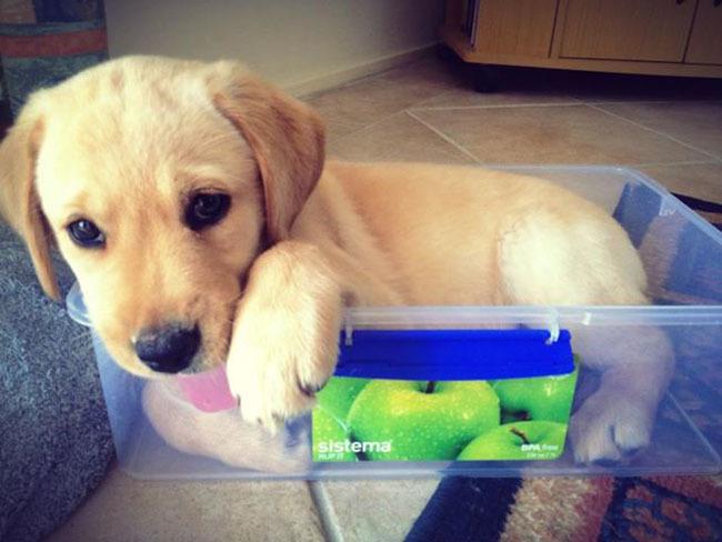 cachorro sentado adentro del tupper