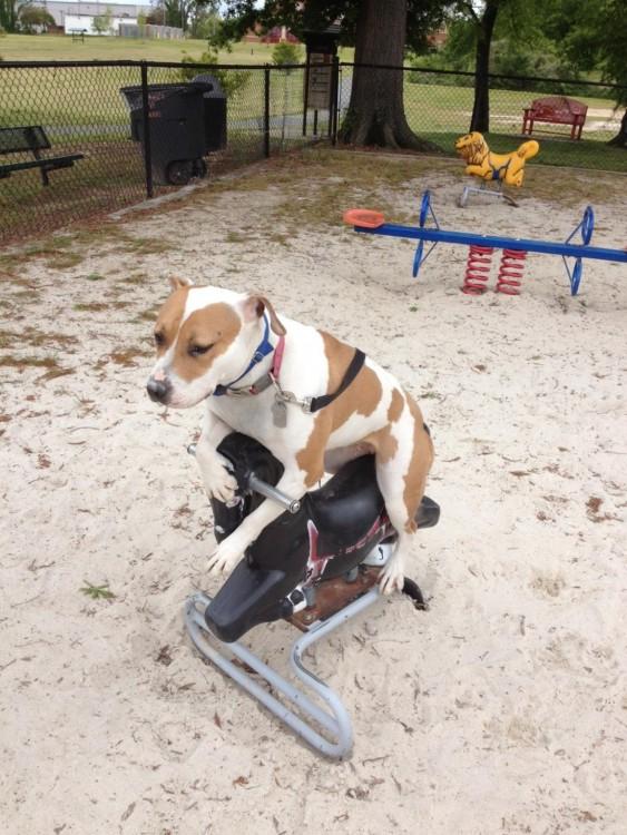 perro sentado en juego de nenes