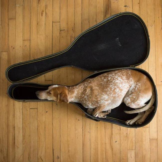 perro sentado adentro de un estuche de guitarra