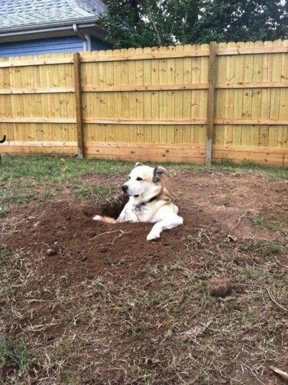 perro sentado en un agujero ne el patio