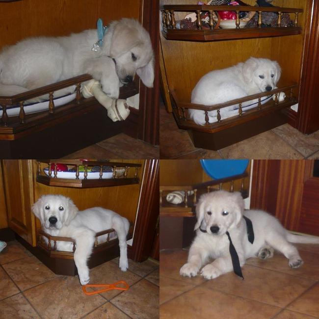 perro sentado en una cuna