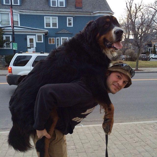 perro negro arriba de una persona