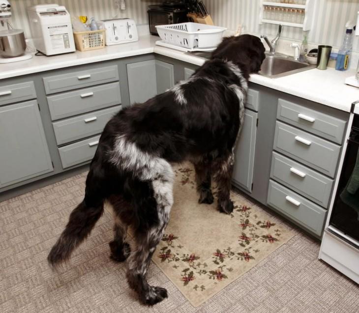 perro ensucia la cocina