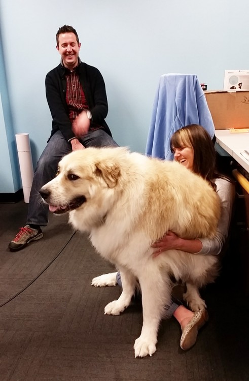 perro blanco sentado en mujer