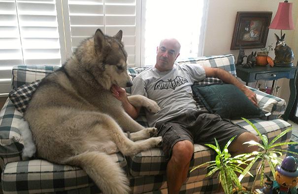 husky en sillón al lado de hombre