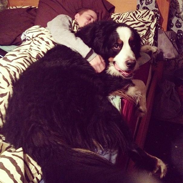 perro negro acostado en sillon con nene