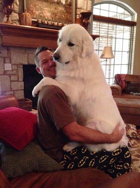 perro arriba de un hombre