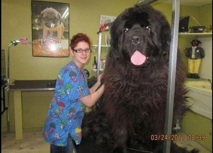perro grande negro al lado de mujer