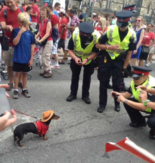 3 policías jugando con un perro