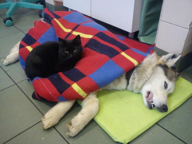 gato enfermero cuidando a otro perro mientras lo abraza