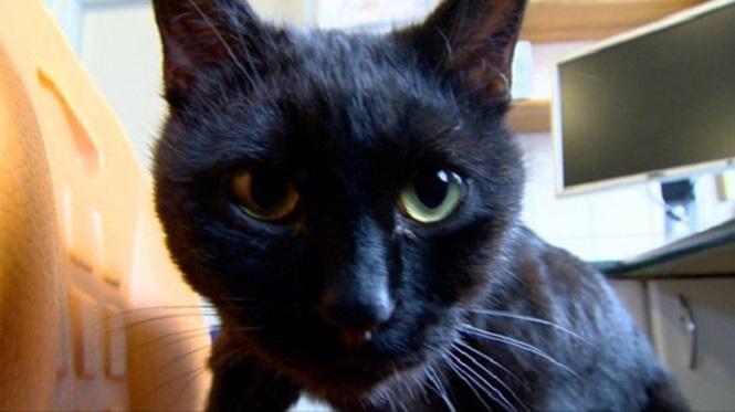 rostro del gato enfermero