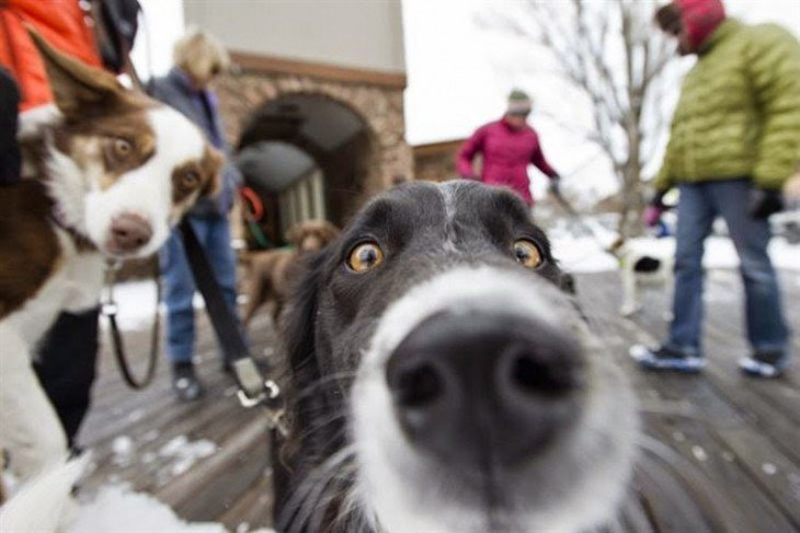 perro en París selfie