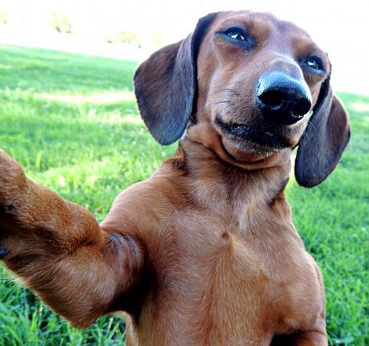 perro salchicha y selfie en el pasto