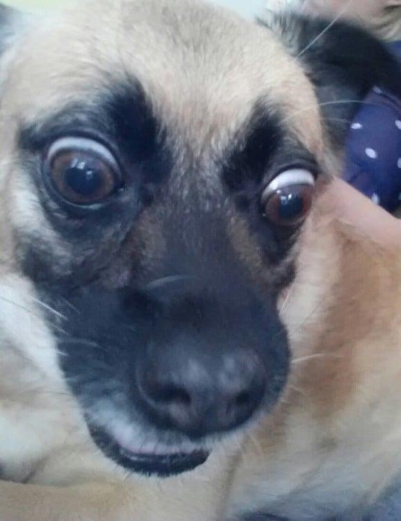 selfies de perros (19)