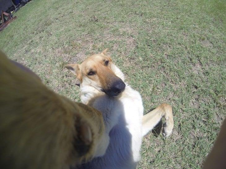perro collier tomándose una selfie