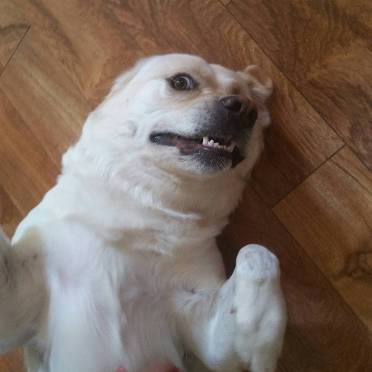 selfies de perros (4)