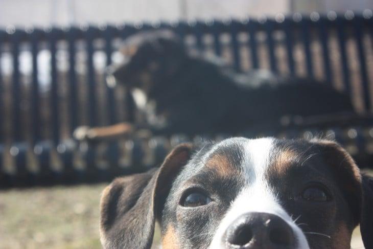 perro selfie y otro en banco