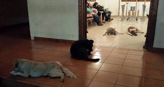 perros en el cortejo funebre