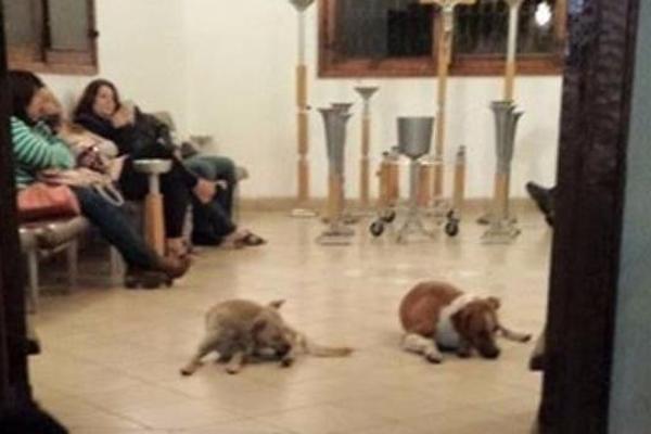 perros rinden homenaje a quienes lo alimentaban