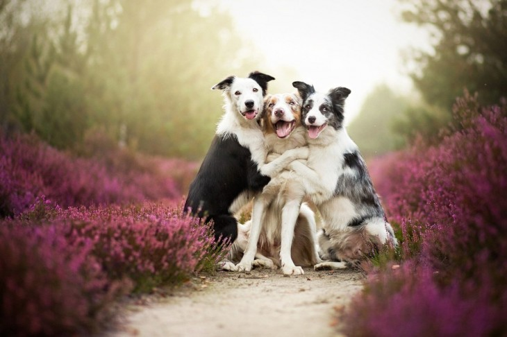 perros jugando y abrazados