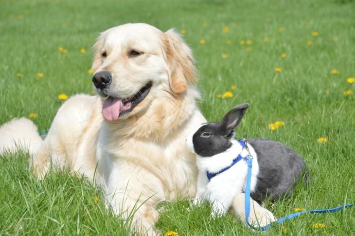 perro con un conejo