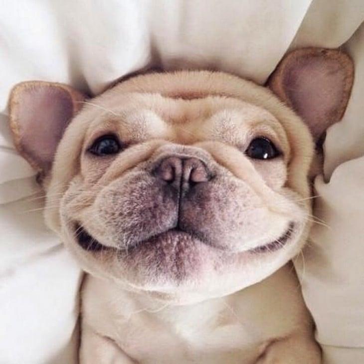perro goofy