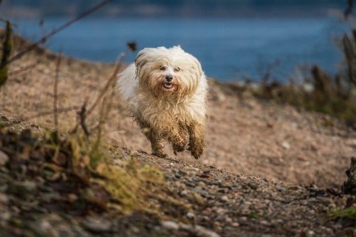 perro sucio corriendo heliz