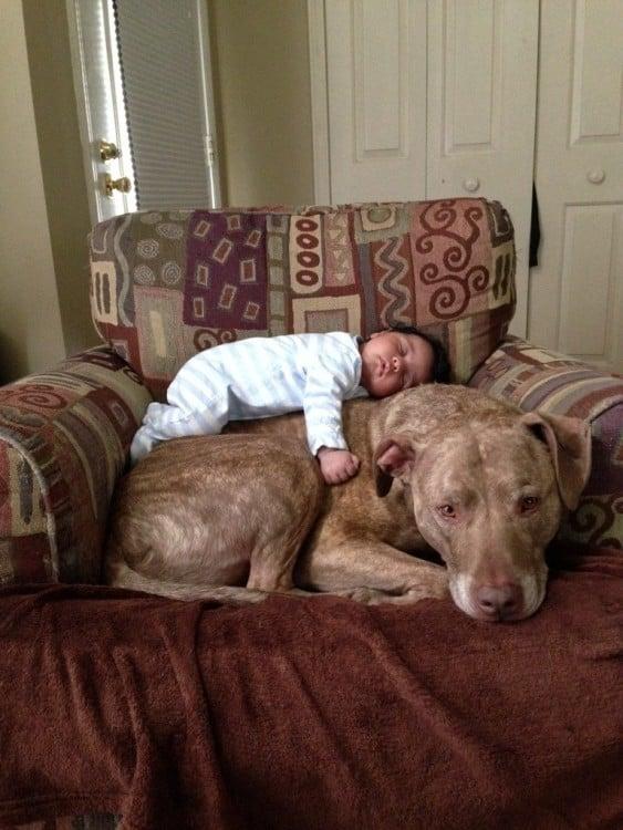 perro con bebé encima