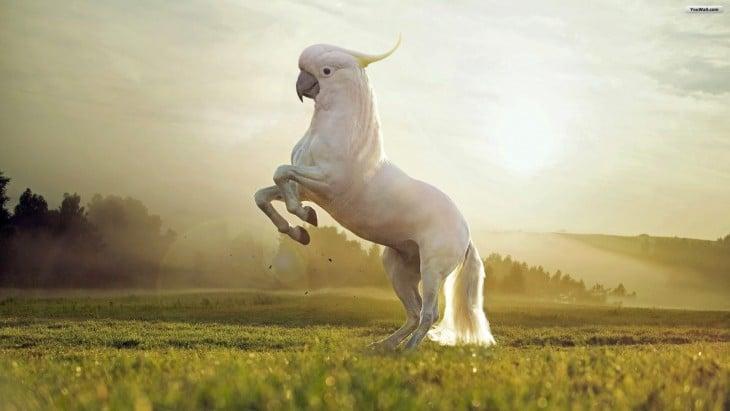 centauro con cara de guacamaya