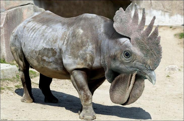 Rinoceronte con cara de gallo