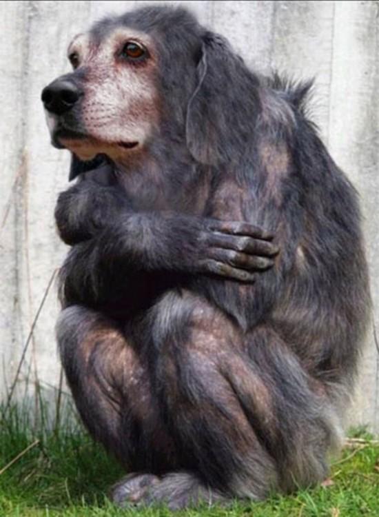 Cuerpo de gorila con cara de perro