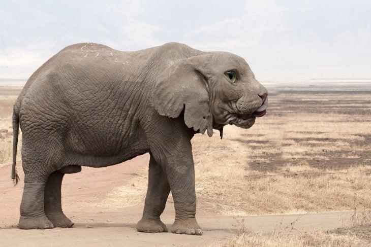 híbrido de un Elefante con cara de gato