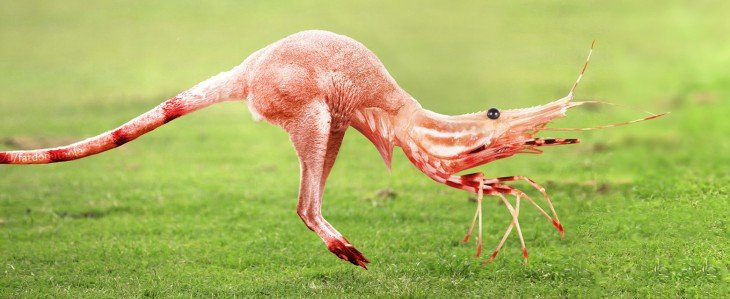 animal mitad cangrejo, mitad canguro