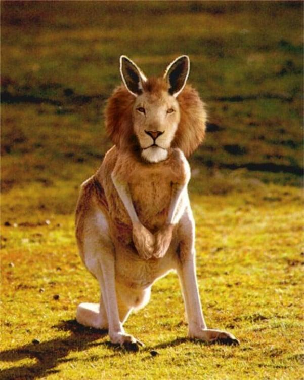 Canguro con cabeza de león