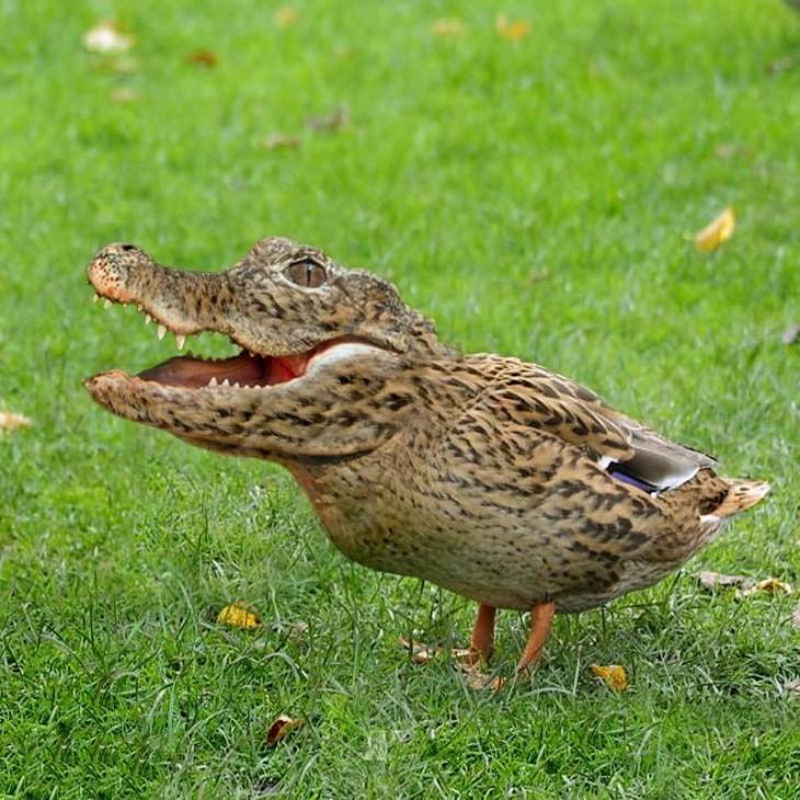pájaro con cabeza de cocodrilo sobre el césped