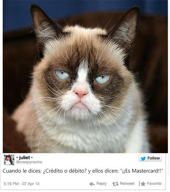 gato con cara de que emoción