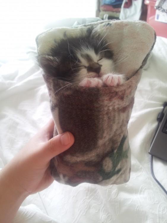 bolsa para gato