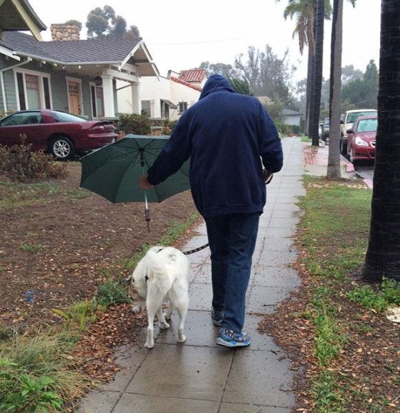 hombre le tapa la lluvia a su perro con una sombrilla mientras lo saca a pasear