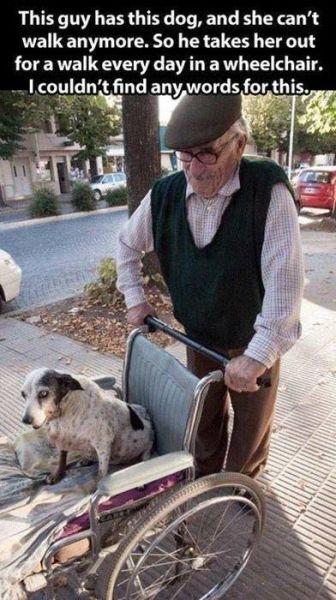 hombre pasea a su perro anciano en silla de ruedas