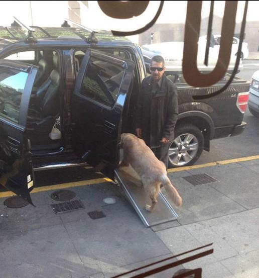le construyen rampa a perro para que pueda subir la alarma