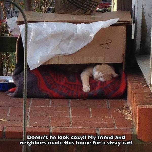 vecinos le hacen camita a gato para que tenga donde dormir en el vecindario