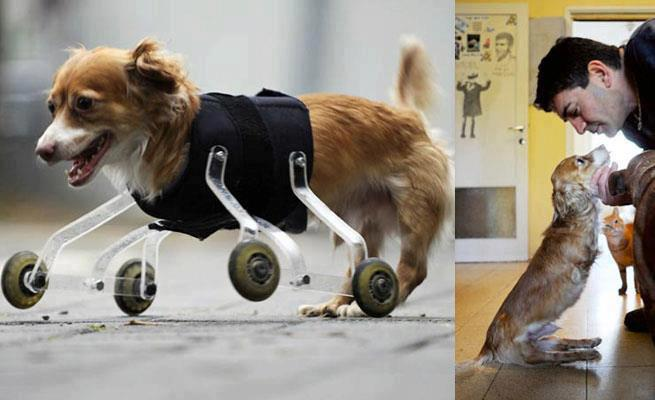 perro discapacitado con rueditas