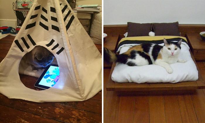 gato con actualizaciones tecnologicas
