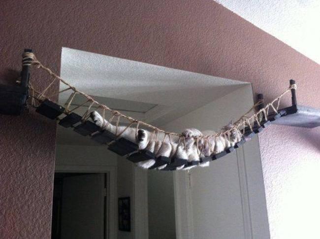 hamaca para gato