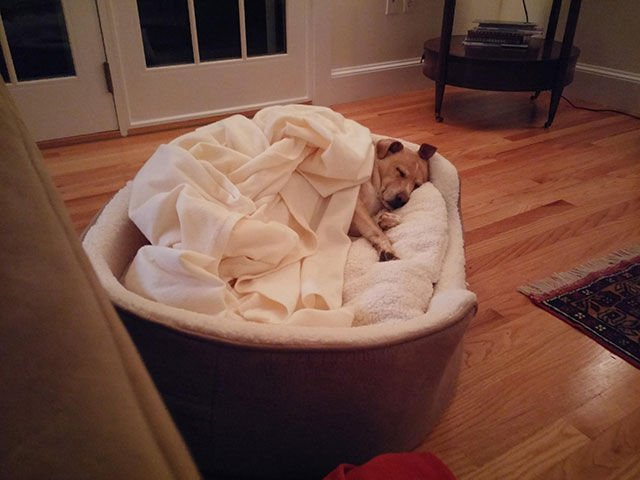 cama para perro mas comoda que la de un humano
