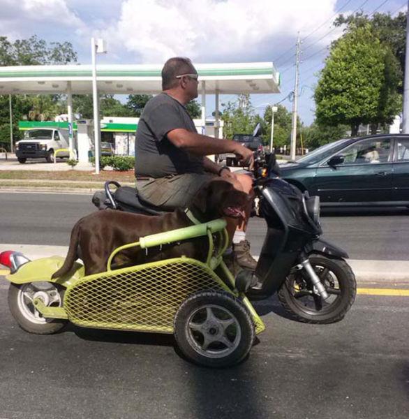 hombre diseña carrito de moto para su perro