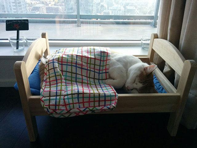 gato acostado en su camita construida por su dueño