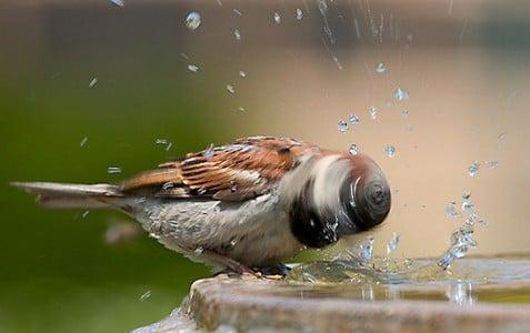 pajaro se sacude el agua