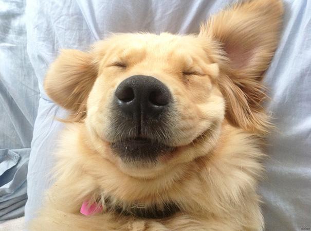 perro sonriendo placenteramente por las cosquillas